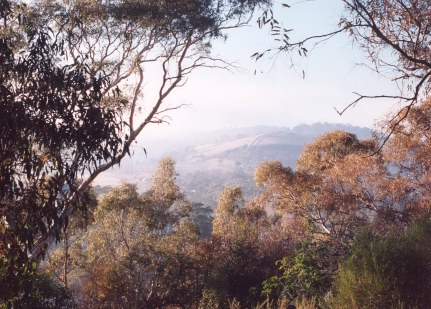 Mist through the gum trees 2.